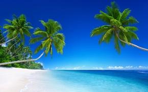 Картинка песок, море, небо, солнце, облака, тропики, пальмы, голубое, берег, горизонт