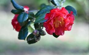 Картинка листья, природа, роза, лепестки
