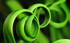 Обои фото, трава, зелень