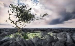 Картинка небо, камни, дерево