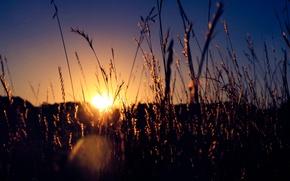 Картинка dusk, stalks, sun, fireball, twilight, grass, sunset