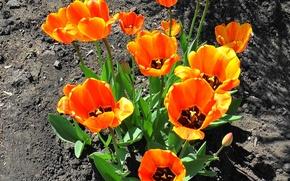 Картинка цветы, Весна, обложка