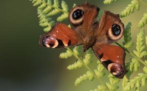 Картинка макро, фон, бабочка, крылья, папоротник, усики