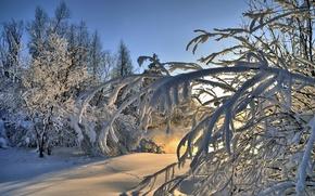 Обои зима, снег, пейзаж, лес