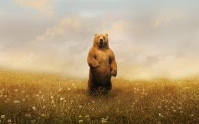 Обои медведь, одуванчики, облака