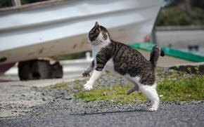 Картинка кот, атака, кошак, котяра