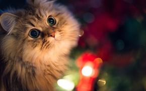 Картинка кошка, морда, огни, Daisy, Ben Torode, Benjamin Torode
