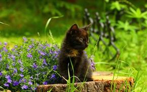 Картинка цветы, пень, котёнок