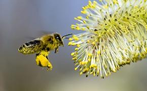 Картинка цветок, пчела, опыление