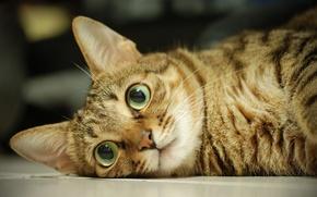 Картинка глаза, кот, макро, шерсть, мордашка