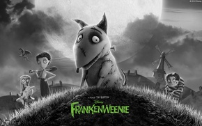 Обои мультфильм, собака, Disney, 2012, dog, Frankenweenie, Франкенвини, Tim Burton