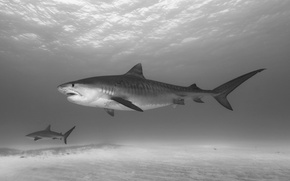 Картинка поверхность, акула, морское дно, солнечный свет