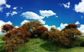 Обои куст, небо, зелень, облака