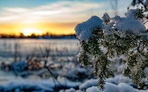 Картинка Солнце, Снег, Елка