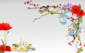 Картинка цветы, коллаж, мак, весна, лепестки, ромашка, открытка