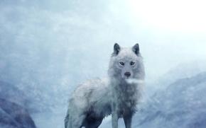 Картинка белый, волк, на фоне, гор