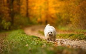 Обои собака, взгляд, осень, друг