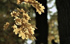 Картинка лист, парк, настроение, Осень, GAlex