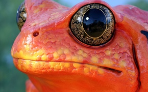Картинка глаз, лягушка, Красная