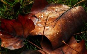 Картинка листья, вода, макро, роса, капля, листик, листочек, nature, water, autumn, macro, drops, leaf, dew, leave