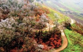 Обои дорога, деревья, Весна
