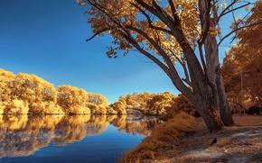 Картинка осень, небо, деревья, пруд, парк