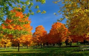 Обои красота, парк, спокойствие, скамейка, золото, свежесть, ярко, лавочка, солнце, гармония, тишина, осень, отдых, свет, природа, ...