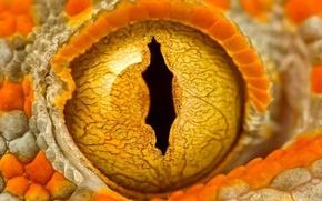 Картинка оранжевый, зрачок, газ, геккон