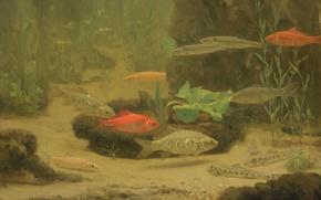 Картинка природа, картина, Золотые и Серебряные Рыбки в Аквариуме, Gerrit Willem Dijsselhof