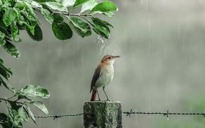 Картинка капли, дождь, душ, птичка