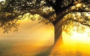 Картинка поле, солнце, лучи, свет, дерево, ветви, красота