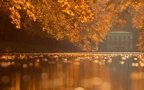Картинка осень, листья, парк, водная гладь