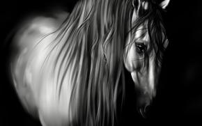 Картинка животное, лошадь, черно-белая, грива, черный фон