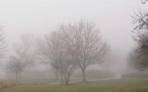 Картинка деревья, Туман, дорожка, trees, fog, path