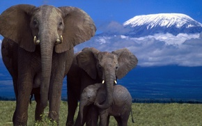 Картинка nature, mountain, savanna, wildlife, Elephants, Affrica