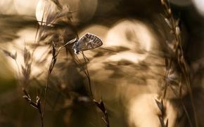 Обои бабочка, природа, фон