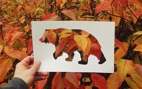 Картинка осень, листья, медведь, силуэт