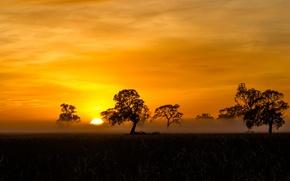 Картинка orange, Sunrise, Mist, silhouette, Fog, Penola