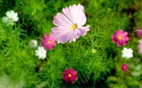 Картинка цветок, лето, макро, природа, nature