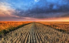 Обои поле, облака, горизонт