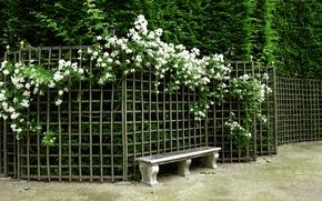 Картинка цветы, скамейка, природа, парк, сад, Nature, park, flowers, garden, bench
