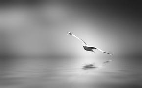 Картинка птица, арт, черно-белое, Спокойствие, размышление