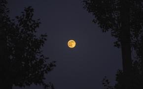 Картинка red, moon, hot, photographer, night, orange, nice, armenia, yerevan, edwin-i, supermoon