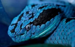 Картинка глаз, змея, голова, чешуйки