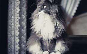 Обои кошка, взгляд, кошак, кот