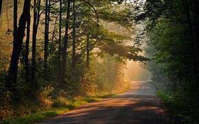 Картинка листья, солнце, лучи, деревья, природа, фон, дерево, widescreen, обои, день, дорожка, wallpaper, тропинка, trees, широкоформатные, …