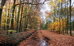 Картинка Осень, Лес, Лужа, Fall, Листва, Autumn, Forest, Leaves