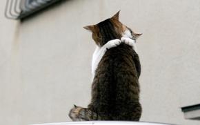 Картинка любовь, встреча, кошки, 150