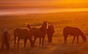 Картинка солнце, свет, кони, лошади, пастбище, light, nature, sun, orange, horses, табун