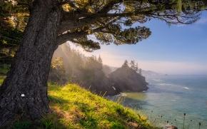 Картинка море, деревья, камни, скалы, побережье